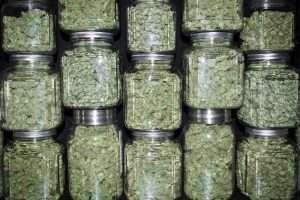 how much marijuana