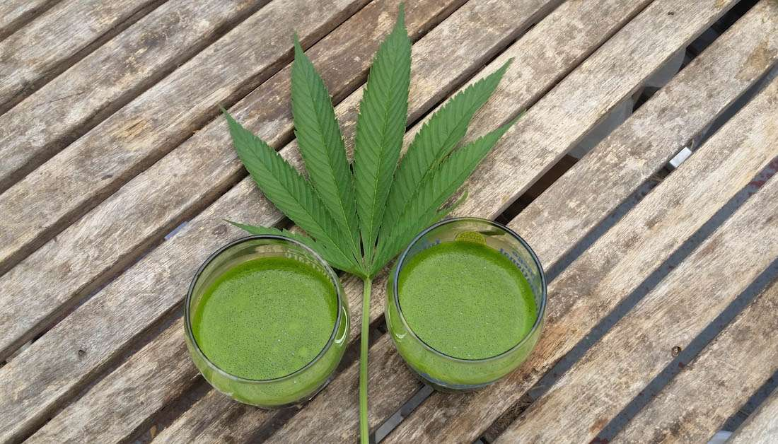 How to Use Male Marijuana Plants in Juicing